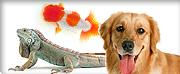 【犬】のお買い物ならビッダーズ